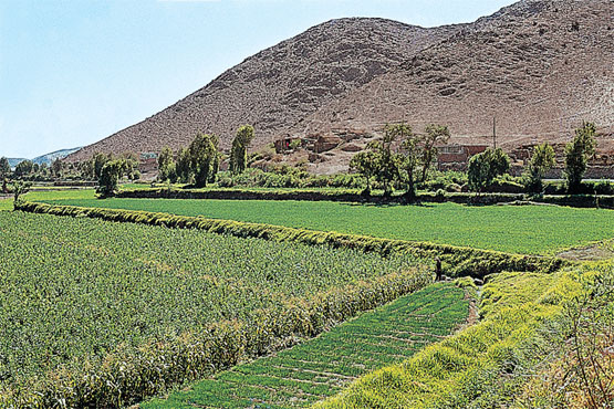 FAO y Landraub - Manera orgánica