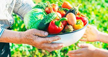 ¿Cuál es el objetivo de la seguridad alimentaria?